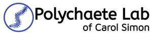 The Simon Polychaete Lab Logo